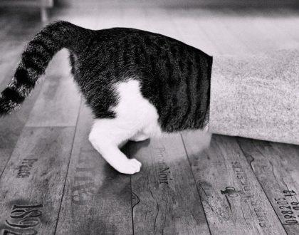 Macska bemászik a pohárba...